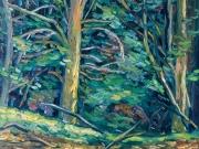 bosco - Pizzorne