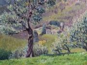 L'olivo - Pieve Santo Stefano
