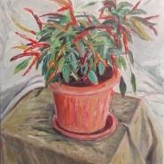 pianta peperoncino